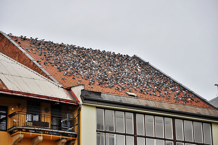 A2B Pest Control are able to install spikes to deter birds from roofs in Southall.