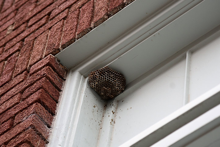 We provide a wasp nest removal service for domestic and commercial properties in Southall.